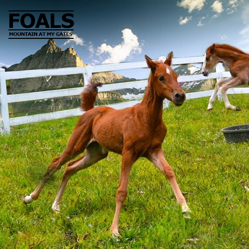 Foals_MountainAtMyGate